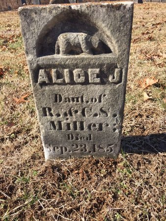 MILLER, ALICE J. - Daviess County, Kentucky | ALICE J. MILLER - Kentucky Gravestone Photos