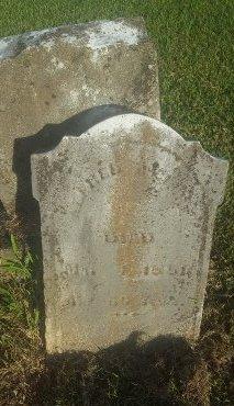 MCCLURE, ALFRED - Union County, Kentucky | ALFRED MCCLURE - Kentucky Gravestone Photos